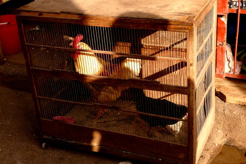 FCG_chickens_market_rabat